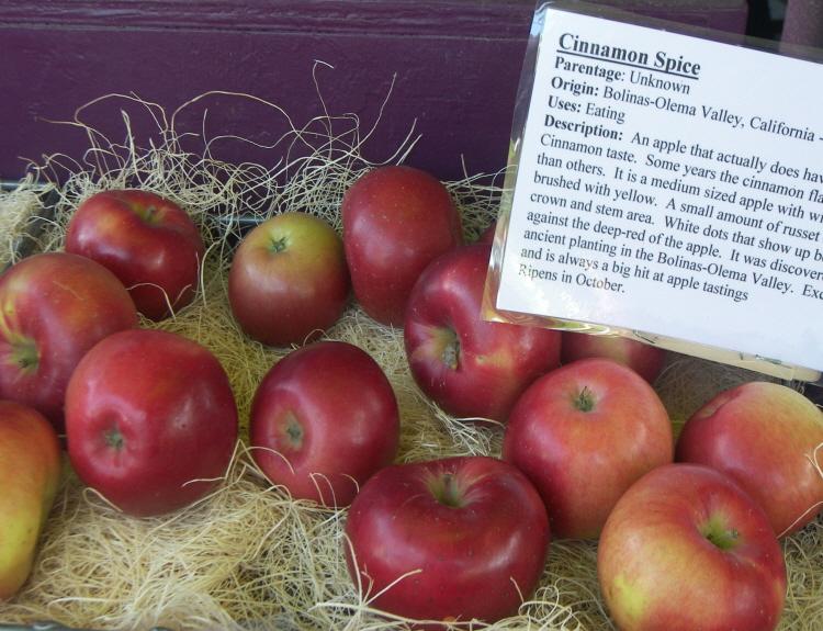 사과 시나몬스파이스 /m26자근묘 접목1년