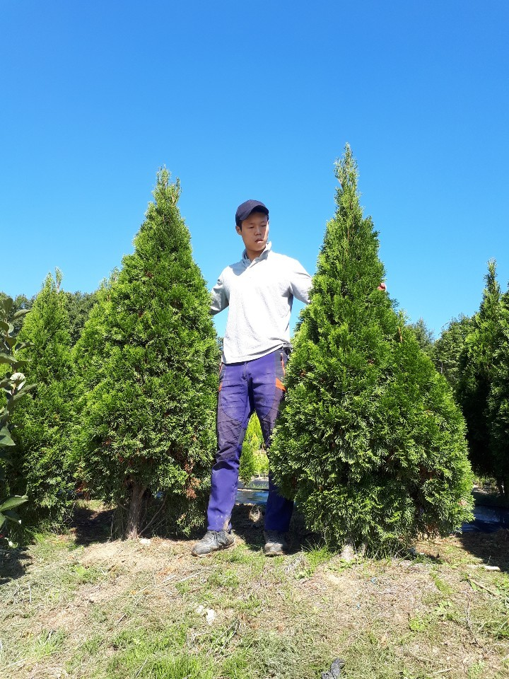에메랄드그린 / 키180cm